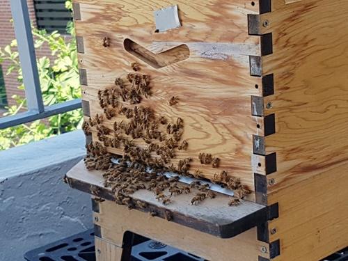 꿀벌.jpg